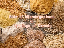 Spoilage of Cereals by microorganisms