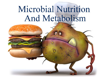 chapter 6 microbial nutrition and growth